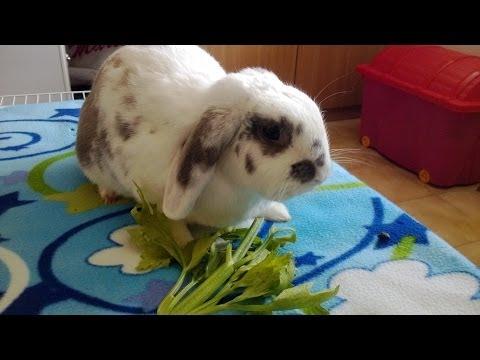 Alimentazione del Coniglio , Mondo Lapino video 1