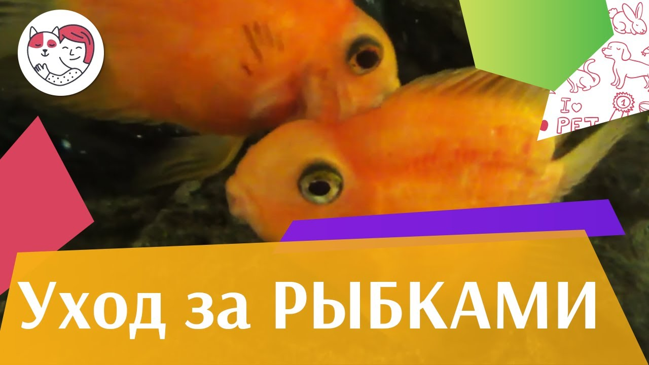 4 распространенные ошибки при уходе за аквариумными рыбками на ilikepet