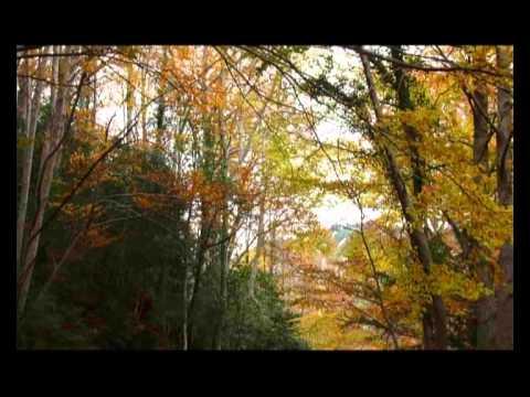 paseo en otoño para visitar el haya padre
