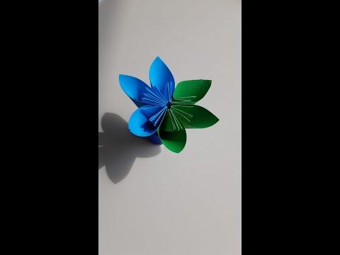 TITANIC Frühlingsblume