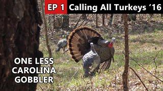 Carolina Gobbler Makes A HUGE MISTAKE! - Calling All Turkeys