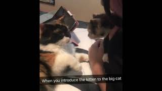 Прелестный кот рекомендуем поглядеть   Приколы до слез - Collab #150