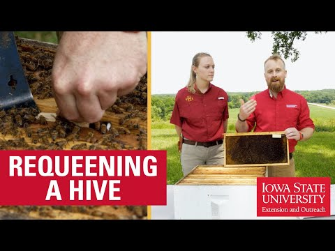 , title : 'How to Requeen a Beehive