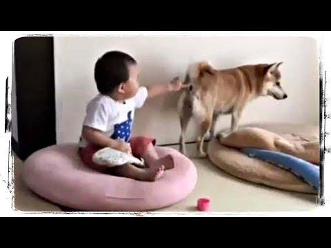 , title : 'ЖИВОТНЫЕ И ДЕТИ (приколы с животными) | ANIMALS AND KIDS (funny animals) #534'