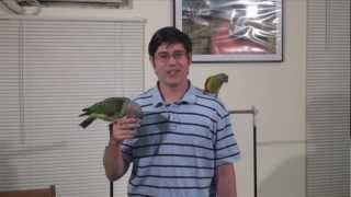 Parrot Wizard Bird Show & Seminar - June 23 in Phoenix AZ