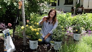 Planting Some Roses in my Garden! 🌿// Garden Answer
