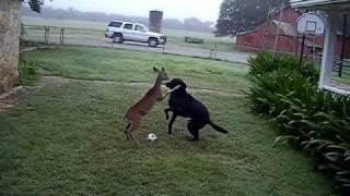 Футбол: Собака против Оленя