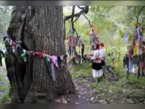 Деревья - памятники живой природы. Открытие. Мордовия.