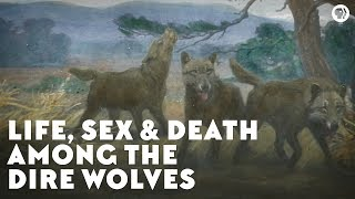 Life, Sex & Death Among the Dire Wolves