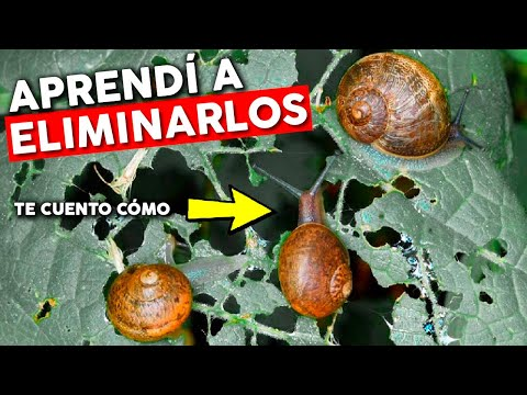 How to eliminate SNAILS and SLUGS. What WORKS and what DOESN'T?