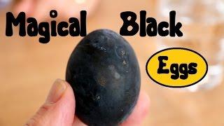 JAPANESE FOOD - Black Sulfur Eggs (in Hakone)