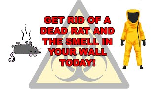 How to get rid of dead rat smell in the wall