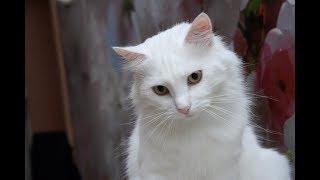 Приколы с котами 2018. Животные зажигают! Кошка Муся ловит шарик!