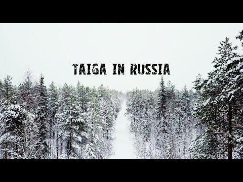 Красота таёжного леса в России, Республика Коми DJI Mavic Pro