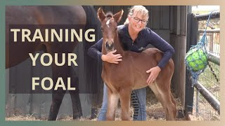 Foal Handling Tips In The First Few Days