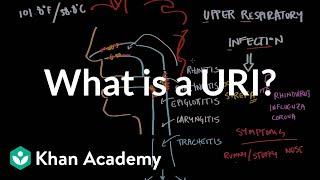 What is an upper respiratory infection (URI)?   NCLEX-RN   Khan Academy