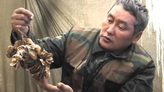 Смотреть онлайн Зимняя охота на медведя в берлоге