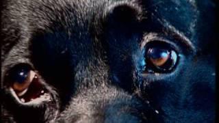 Russian Bigfoot, Hypno Dog, Thylacine