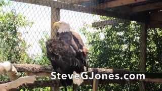 The Importance of Symbols - American Bald Eagle - Dr. Steve G. Jones