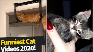 40 Hilarious Cat Viral Videos   Ultimate Cat Compilation Of 2020 So Far