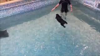 Hydrothérapie : check-up pour Hiro