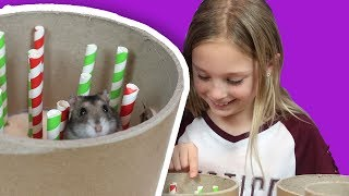 Christmas Hamster Maze Challenge | Hamster Obstacle Course   The Hoopsters