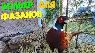 Супер Вольер для фазанов! Разведения фазанов