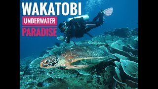 preview picture of video 'Wakatobi Dive Trip I Underwater paradise #4'