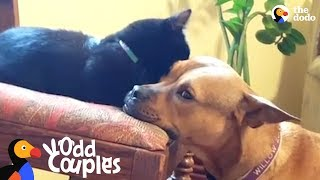 Kitten Becomes The Leader Of Her Dog Pack | The Dodo Odd Couples