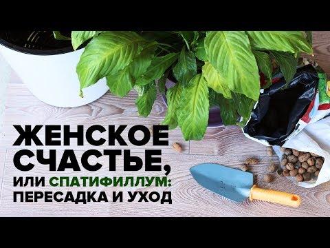 Какое счастье не курить