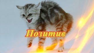 Смешное о животных Позитив Для детей Создай себе хорошее настроение