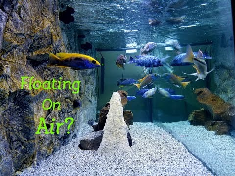 Are They Floating? Simple Tips on Crystal Clear Aquarium Water