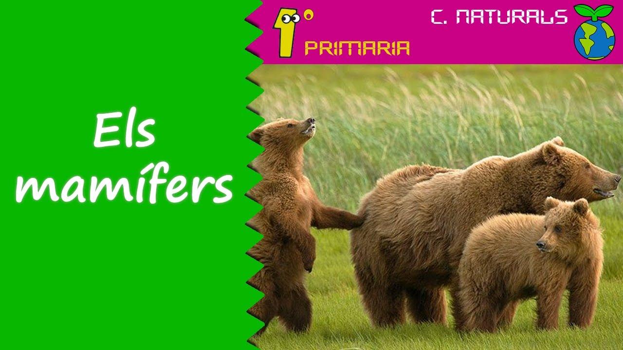 Ciències de la Naturalesa. 1r Primaria. Tema 5: Els mamífers