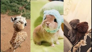 Cute baby animals Videos Compilation cute moment of the animals - Soo Cute! #3