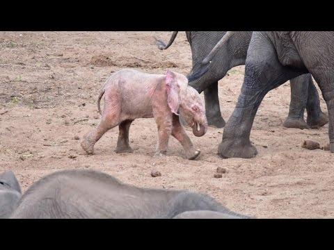 Pink Elephant On Parade CUTETROPOLIS