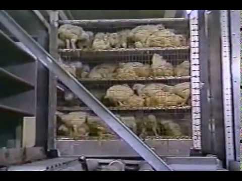Rentgenowskie wykazały osteochondroza szyjki