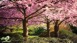 Beautiful Relaxing Music: Japanese Music, Chinese Music, Romantic Music, Meditation Music ★106