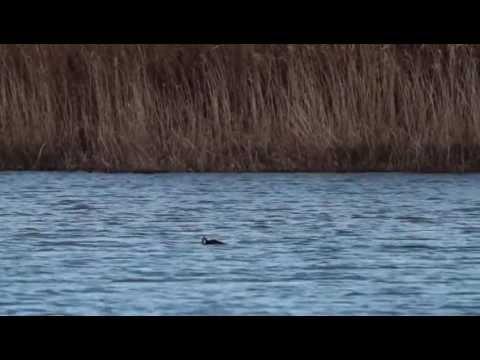 I film in linea su pesca a caccia per aspettare in linea