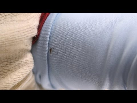 Permethrin-Treated Clothing Isn't Ideal For Keeping Mosquitoes Away