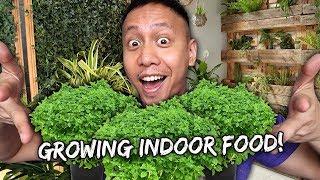 The Progress Of My Indoor Vegetable Garden   Vlog #812