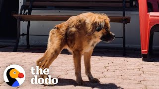 Only A Few Dogs Look Like Her In The World, But She Has No Idea She's Any Different | The Dodo