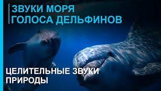 Звуки моря - Голоса дельфинов - Целительные Звуки Природы - 2 ☯ Релакс Музыка