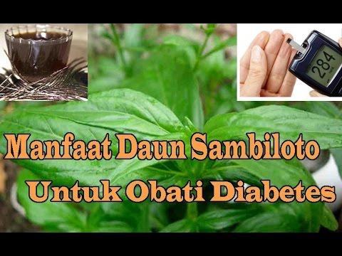 Video Manfaat Daun Sambiloto Untuk Diabetes Melitus