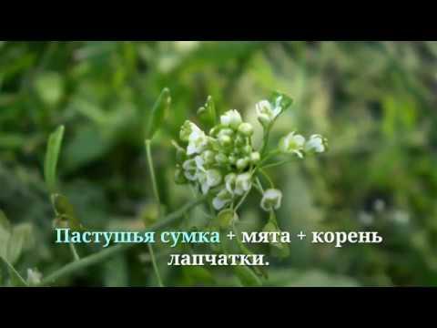 ✔️ Средства от поноса ▶️ травы для лечения диареи