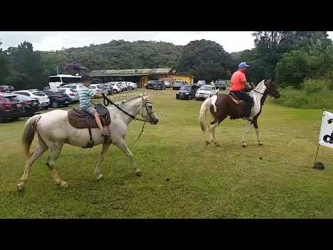 Passeio de Cavalos no Rio Abaixo
