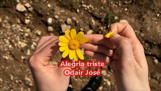 ALEGRÍA TRISTE     ODAIR JOSÉ     CANCIÓN