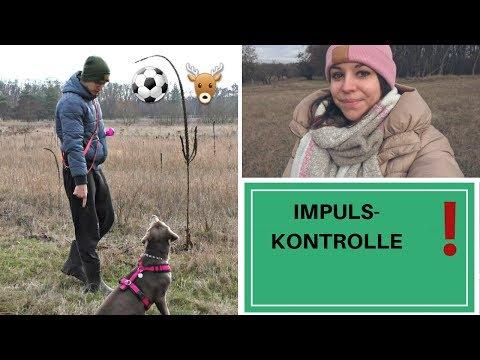 Impulskontrolle | Training | Hundeerziehung