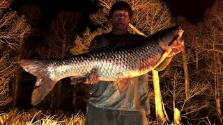 Bow Fishing on Reelfoot Lake