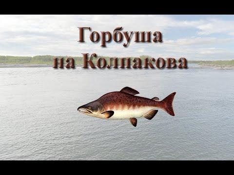 Русская Рыбалка 3.99 Горбуша на Колпакова