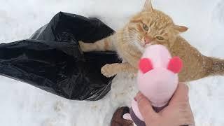 Кот говорит Новый Год Свинка Пеппа или год Желтой Земляной Свиньи))